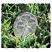Four Leaf Clover Pocket Charms Bulk 50 Piece