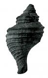 Triton Shell Graphite Sculpture Pencil