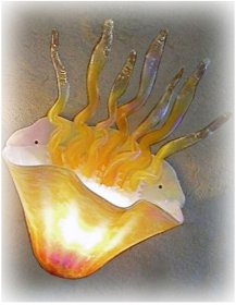 Jellyfish Sconce Light Amber Iridescent 10 Colors